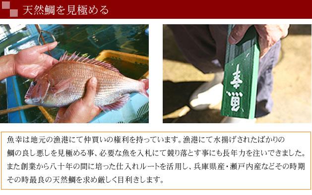 天然鯛を見極める
